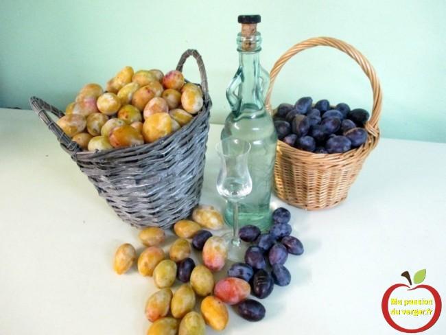 eau-de-vie de quetsche maison- alcool de quetsche - gnole de quetsche - alcool de prunes - schnaps de quetsche- mélange de fruits pour un bon alcool- la meilleur eau de vie de prune et quetsche -regrevudnoissapamegres