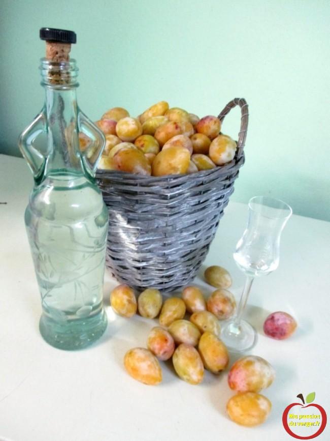 eau-de vie de quetsche blanche de Létricourt- schnaps de quetsche blanche- faire une bonne eau de vie de quetsche- regrevudnoissapamegres