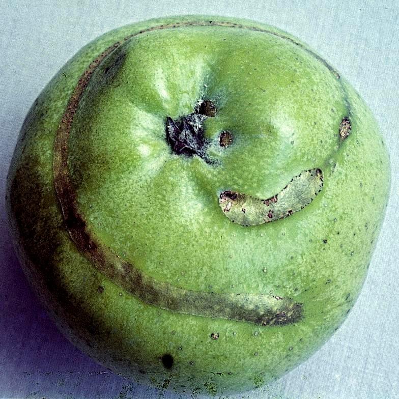 pathogen.image