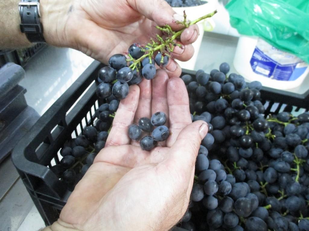 L'éraflage ou l'égrappage est l'action consistant, à séparer les grains de raisin de la rafle, pour faire son vin maison