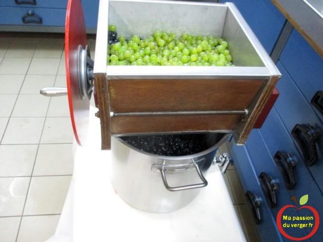 réaliser un jus de raisin maison bio-Le foulage consiste à briser ou éclater, les baies de raisin, en effectuant le moins de mal possible à la peau, en libérant le moût. - regrevudnoissapamegres