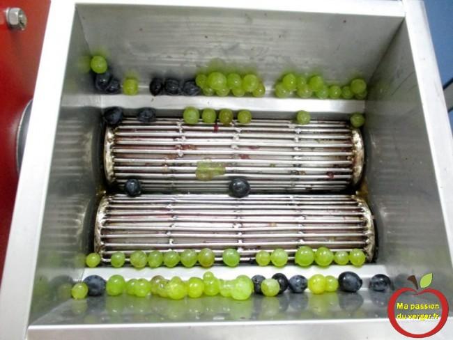 Le foulage a pour but de faire éclater la peau des grains de raisin afin que le jus en jaillisse et pour en faire sortir la pulpe,