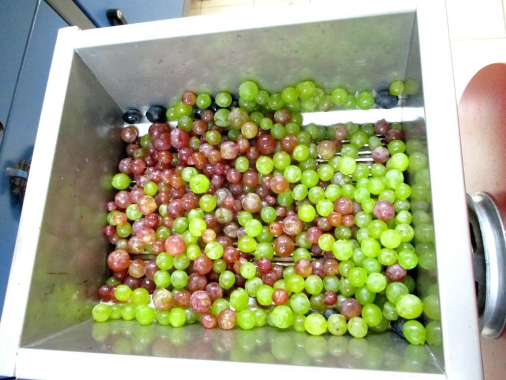 Pour faire un bon vin, on peut mélanger plusieurs variétés de raisin.