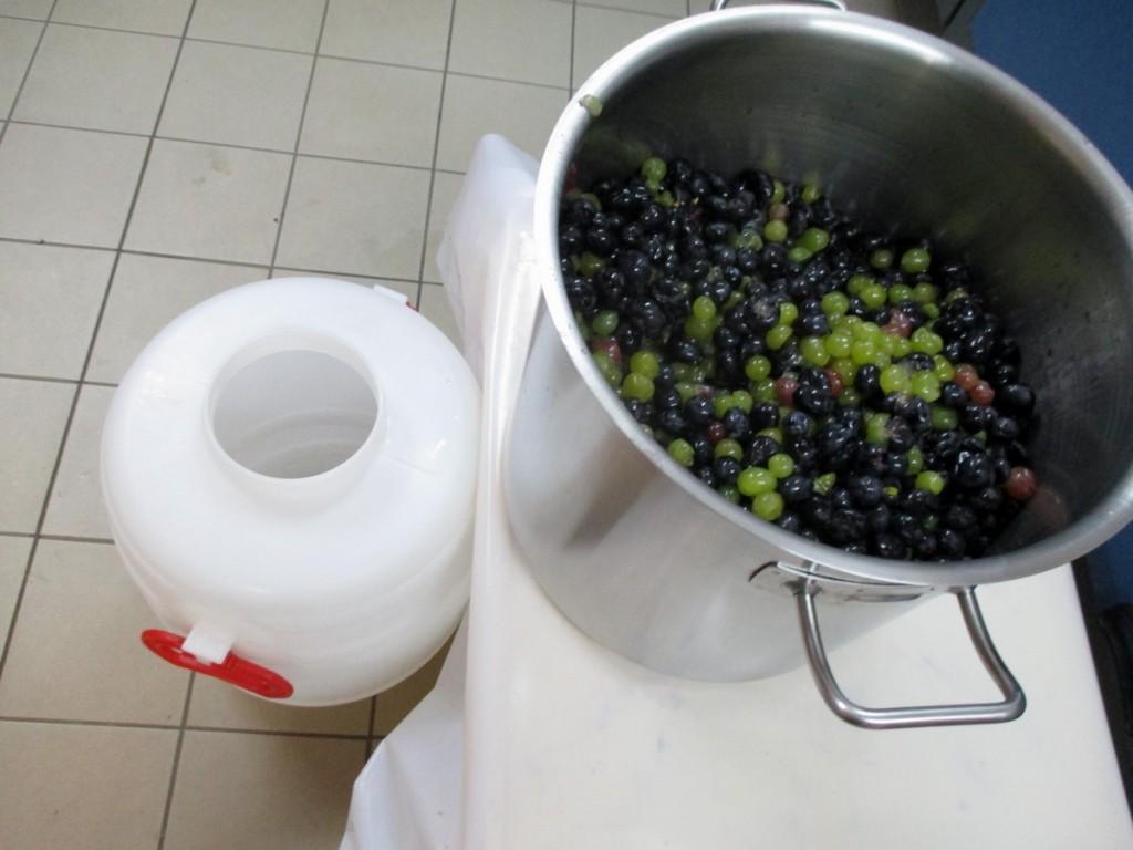 Mise en fût immédiat du raisin.