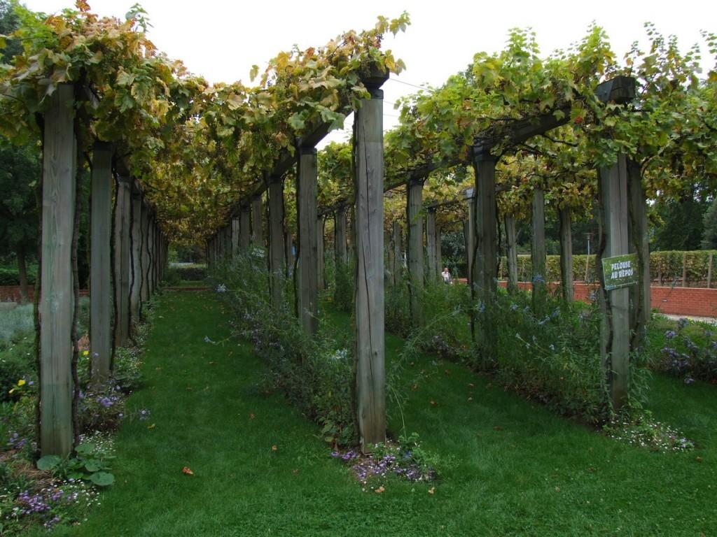 treille vigne sur poteaux