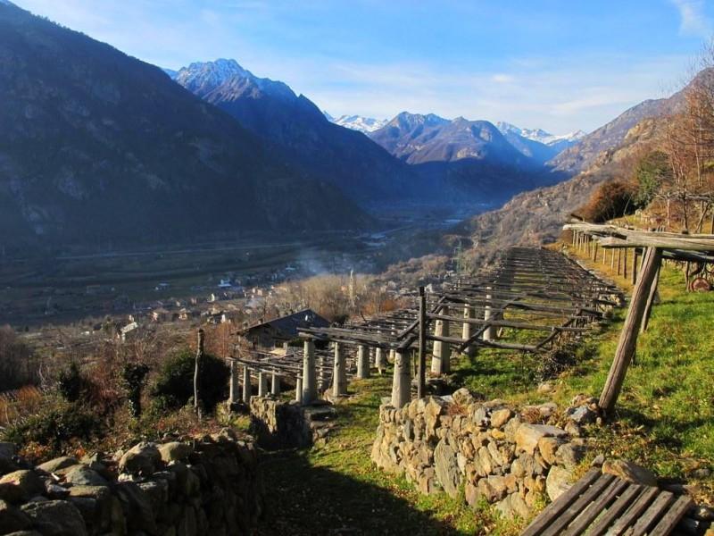 culture vigne en treille par étage