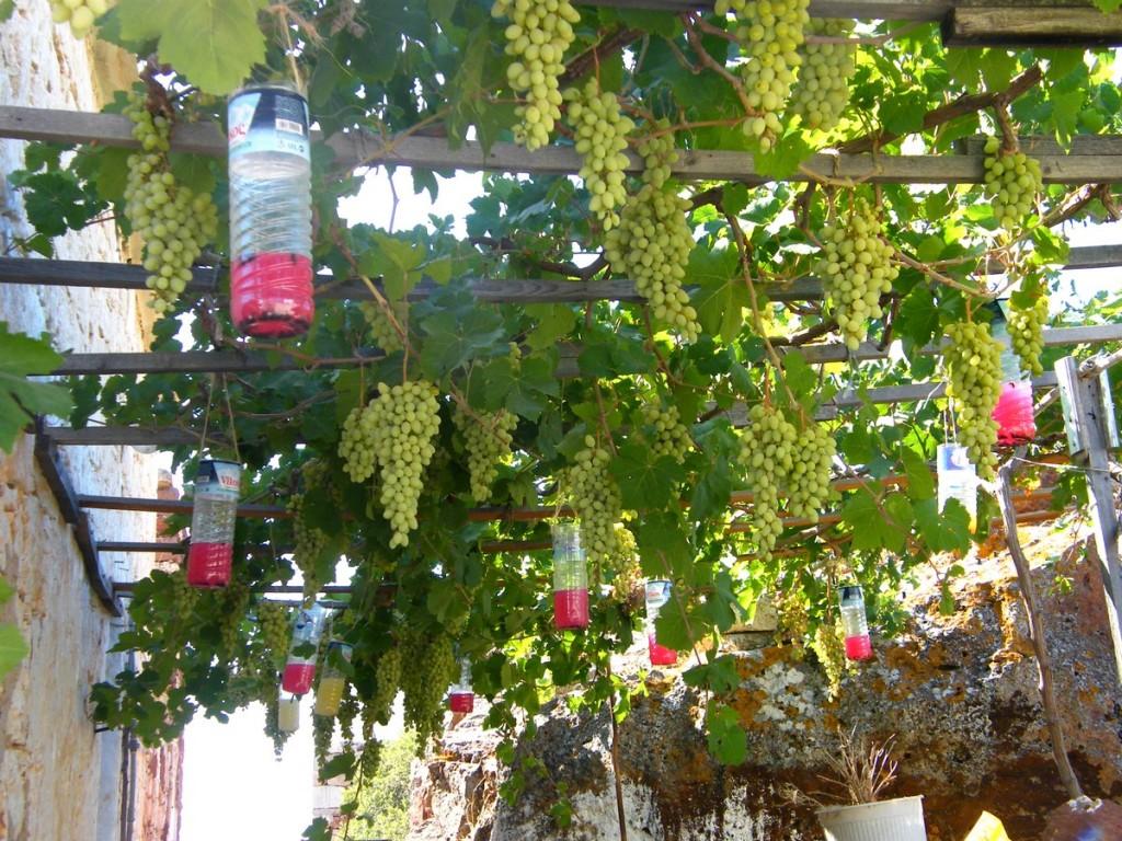 Fabriquer Treillis Bois Pour Plantes Grimpantes construire une treille pour la vigne. | ma passion du verger
