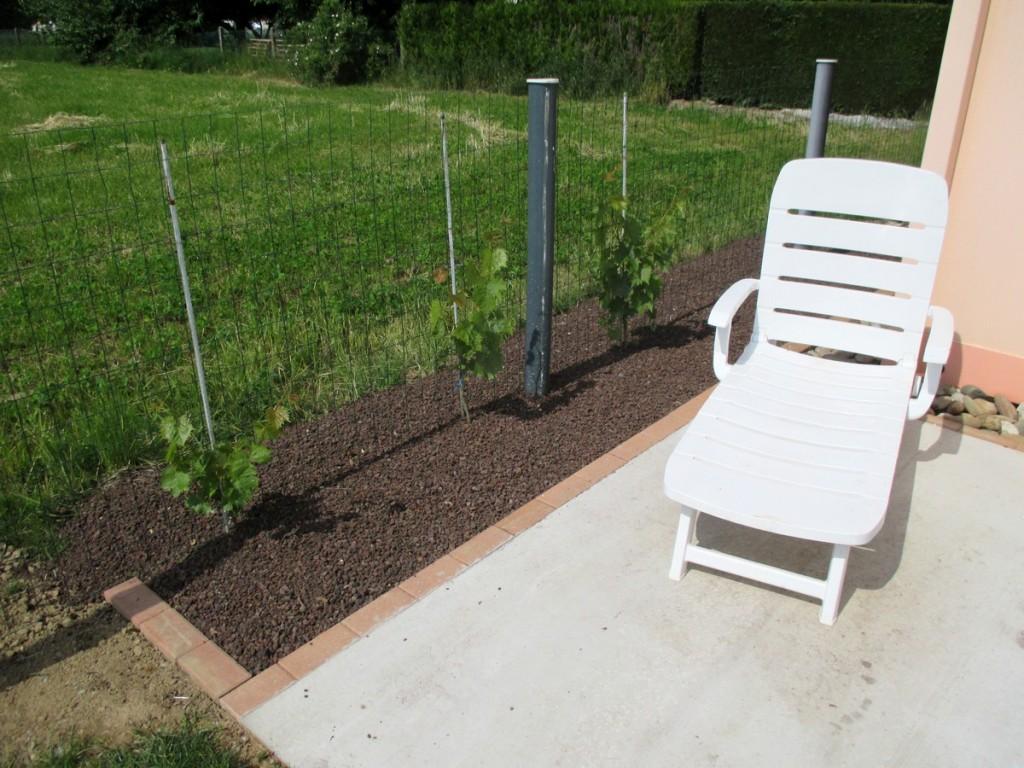 plantation d'une vigne pour treille