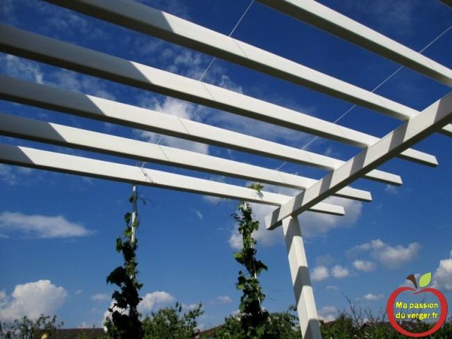 fils pour attacher vigne sur treille ou pergola - fil de palissage pour vigne sur treille ou pergola