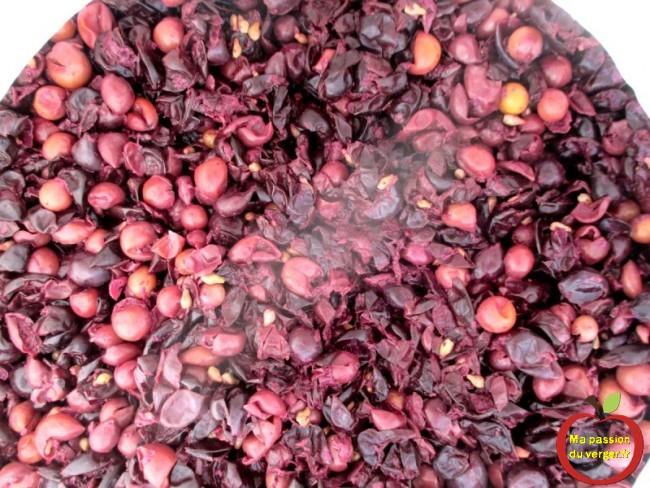 Ouverture du fût, après la macération du jus de raisin et la première fermentation.