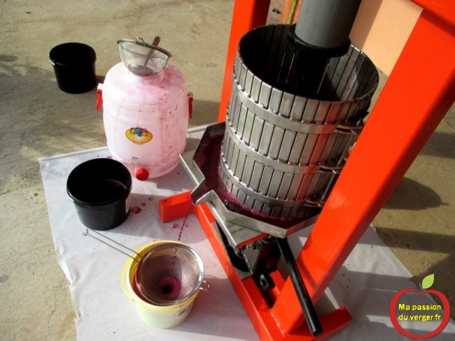 comment presser le jus de raisin rouge avec un pressoir inox.