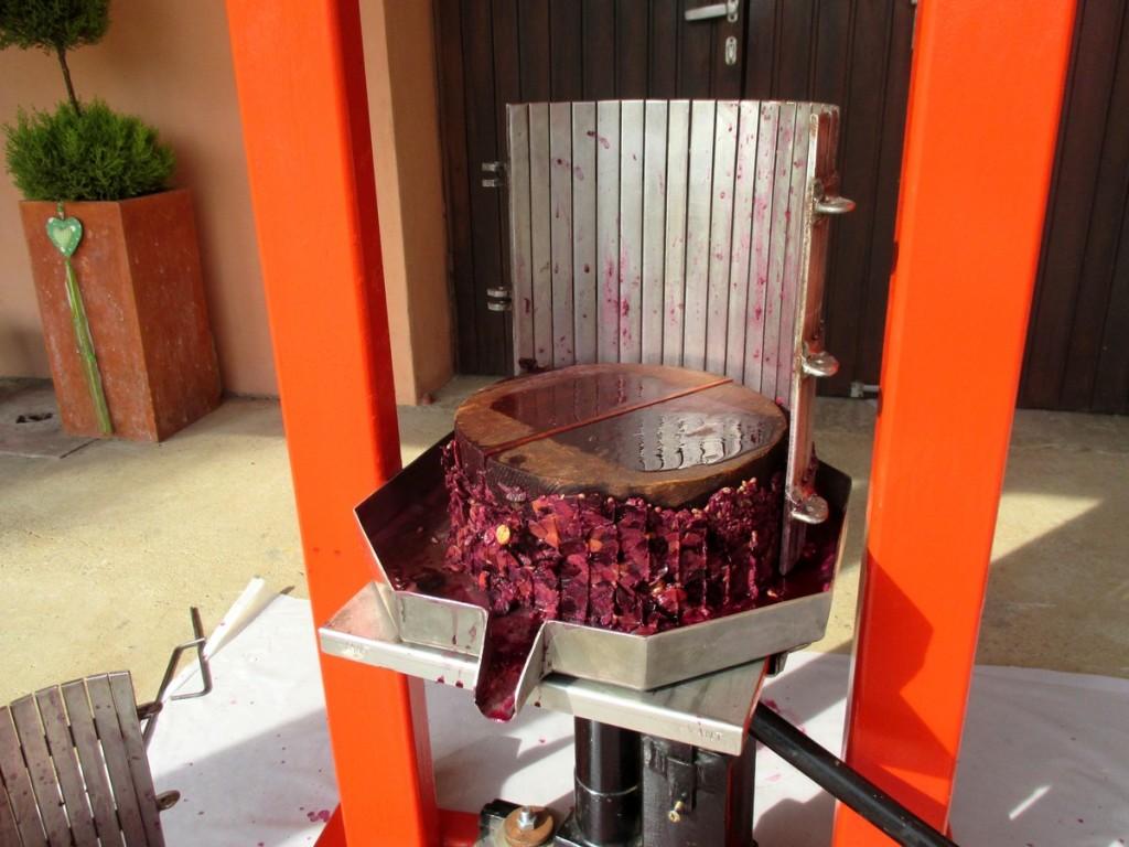 Pressage du raisin, pour réaliser un bon vin soi-même- marc de raisin après le pressurage- eau-de vie de marc.
