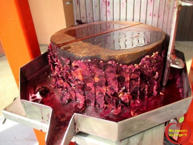 Marc de raisin après le pressage pour le vin maison. Comment faire du vin rouge bio maison- pressoir inox- ma passion du verger