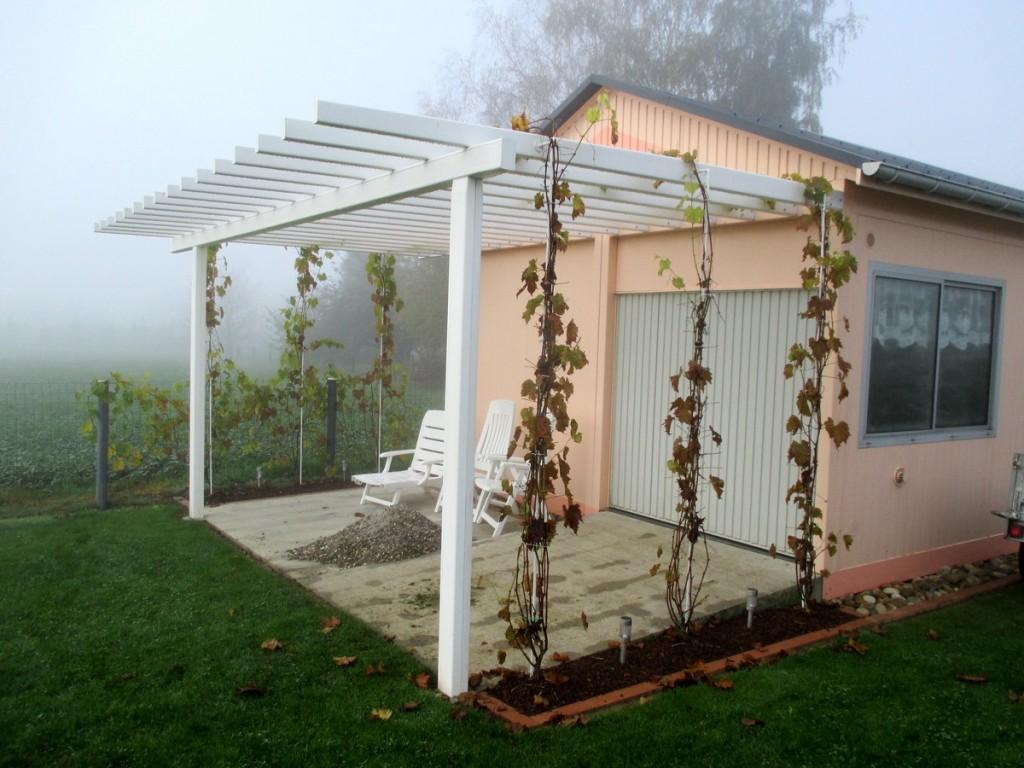 pergola ou treille avec vigne en hiver