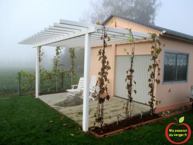pergola ou treille avec vigne en hiver- vigne sur pergola en automne -regrevudnoissapamegres