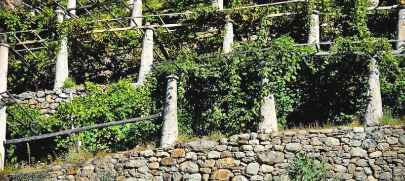 site historique de la treille à vigne