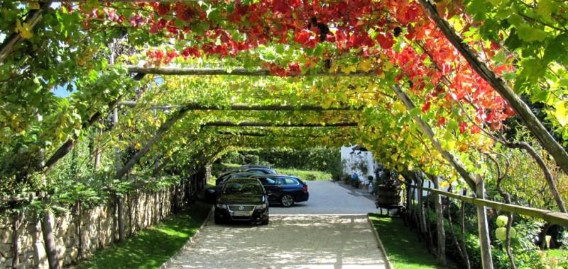 parkplatz-weinlaube-vigne en tonnelle sur parking