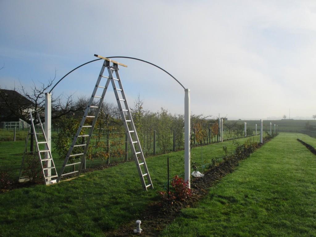 installation arche sur poteaux de palissage