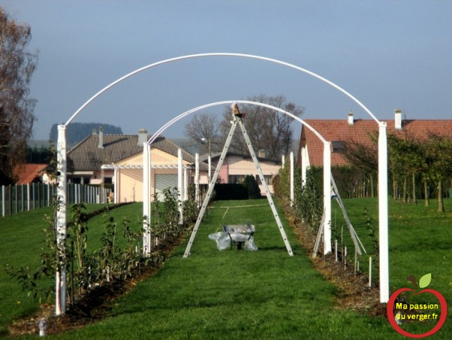 mise en place de la tonnelle pour mes pommier, poirier, vigne en forme cordon ma passion du verger