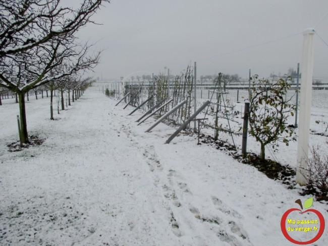 installation des derniers poteaux intermédiaires avec la neige - mise en place poteau palissage