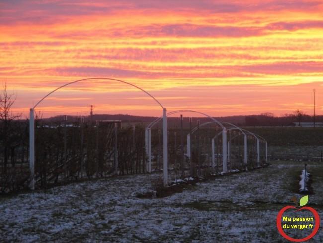 mon palissage avec un beau lever de soleil en hiver, ma passion du verger- regrevudnoissapamegres