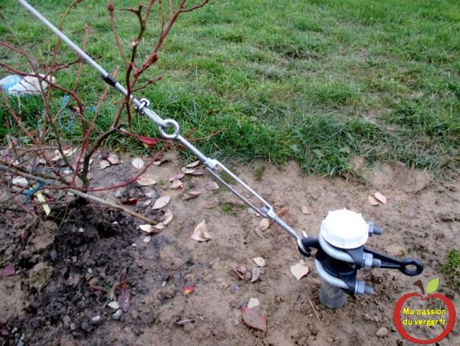 mise sous tension des poteaux du palissage - fixation câble ancrage palissage- regrevudnoissapamegres