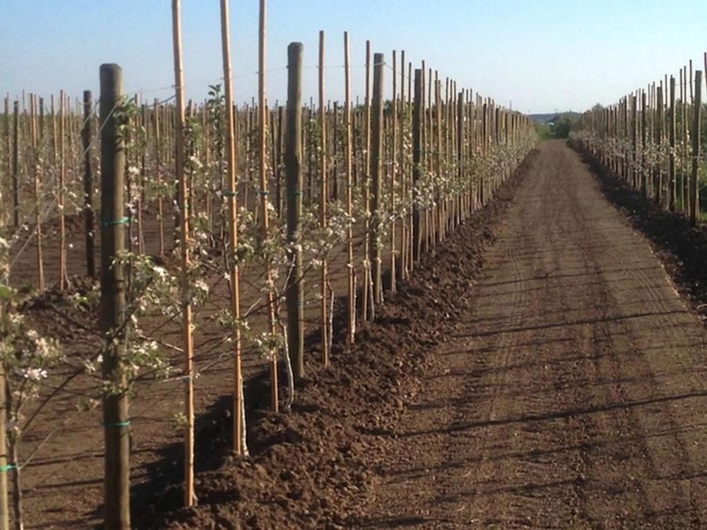 R aliser un palissage pour des fruitiers ma passion du verger - Quel arbre fruitier planter ...