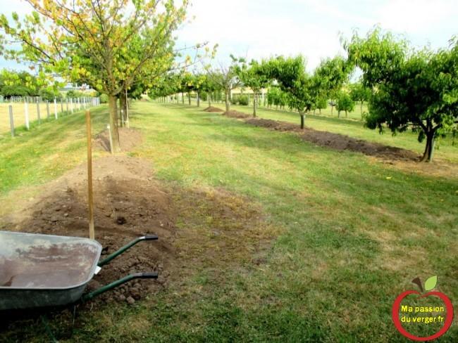 butte pour arbres fruitier