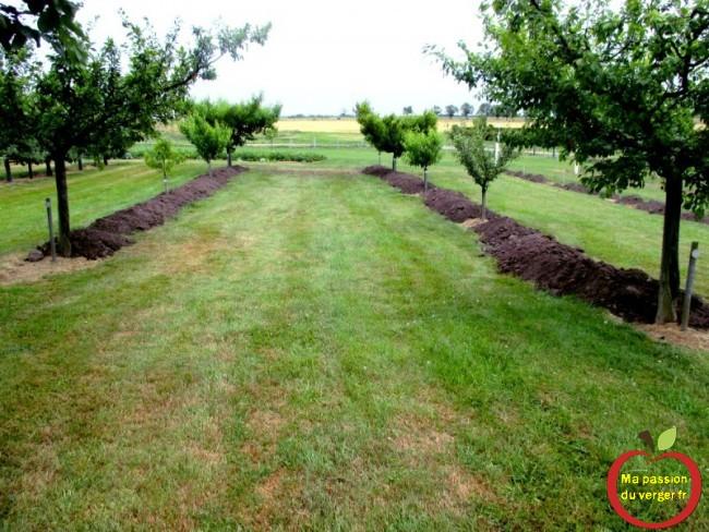 rehaussement de butte pour arbres fruitiers- terre végétal sous arbres fruitiers -