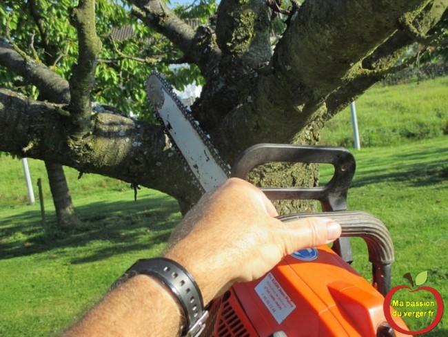 couper cerisier malade - couper cerisier malade- couper fruitier malade-