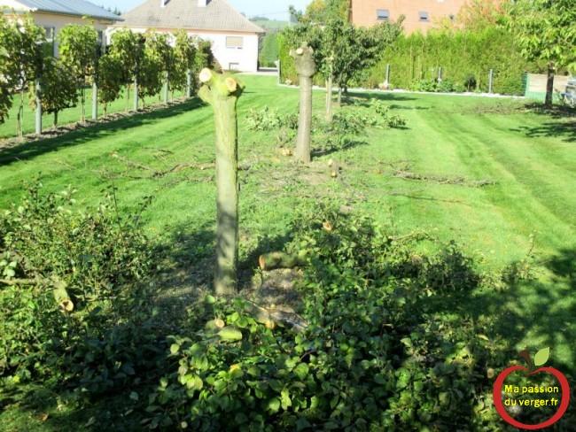 enlever arbre fruitier malades - renouveler plantation fruitier