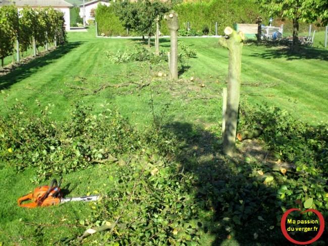 couper arbre fruitier malade- couper cerisier malade