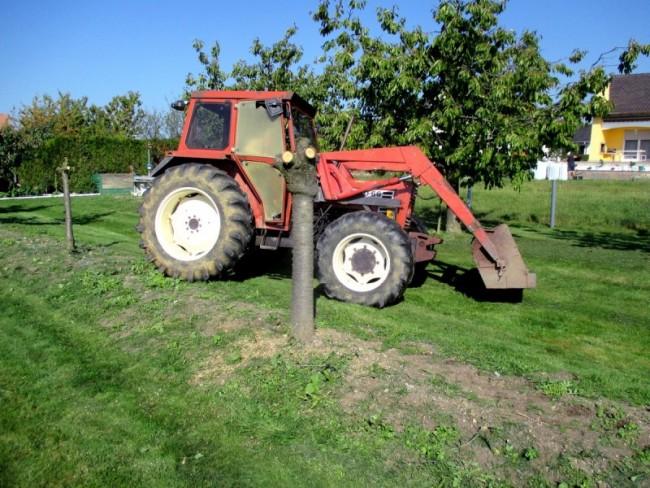 arrachage fruitier avec tracteur -