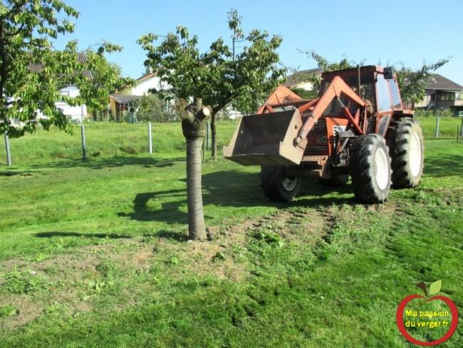 arrachage cerisier malade avec tracteur- tracteur pour arracher arbres fruitiers