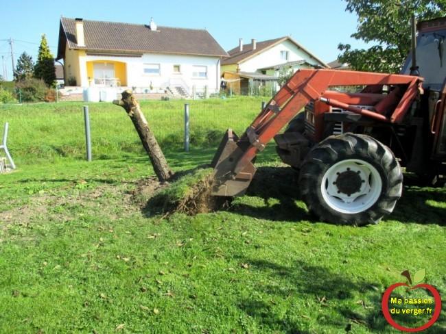 arrachage arbre avec tracteur