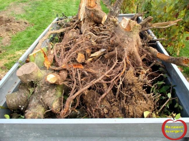 racine d'arbre pour la déchetterie