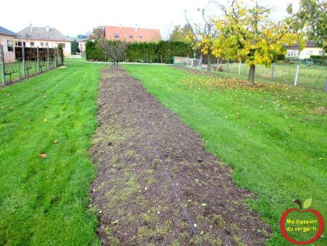 préparation de la plantation des cerisiers sans vers