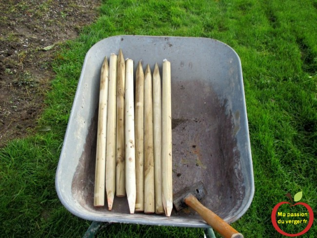 petit tuteur bois pour quenouille- petit tuteur en bois pour scion cerisier