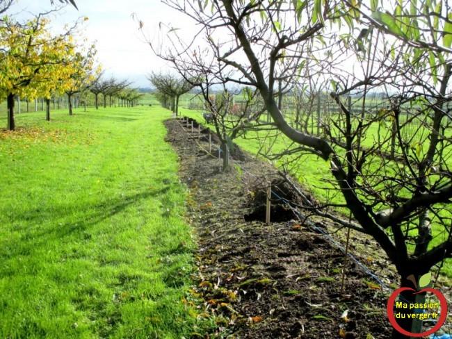 trous  pour plantation cerisier sans vers