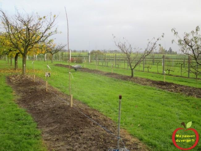 quelle variété de cerise planter