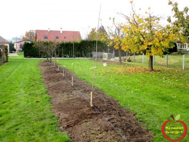 planter des cerisiers en haie fruitière sans vers- regrevudnoissapamegres