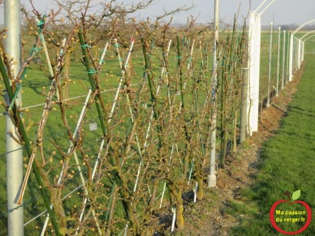 Liens souple Triangle vert, attacher les charpentières et les branches fruitières.-Triangle outillage- Triangle -