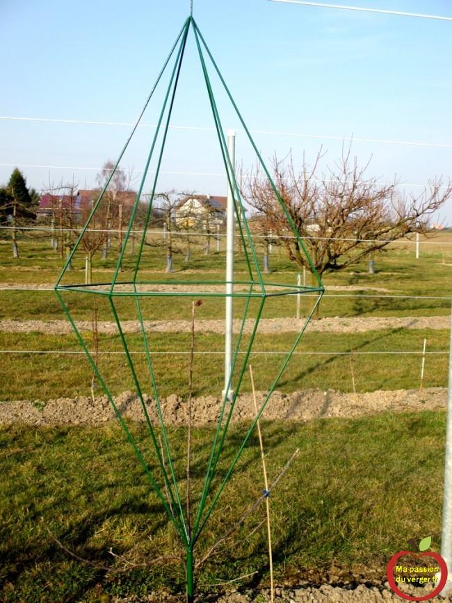 Mise en place des armatures pour mes formes fruitières en pyramide hexagonale double, contre le palissage.