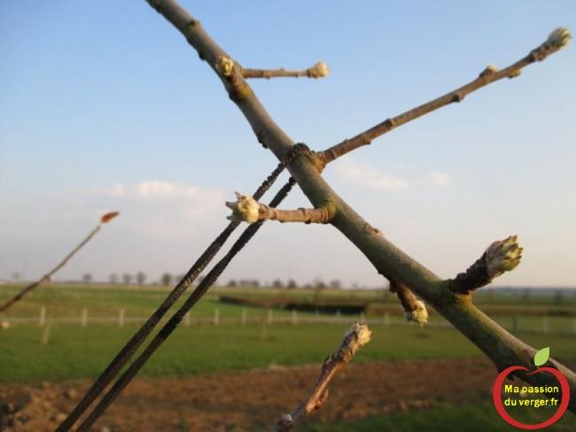 Une fois sont travail d'arcure réaliser, l'élastique pour arcure va tomber tout seul.