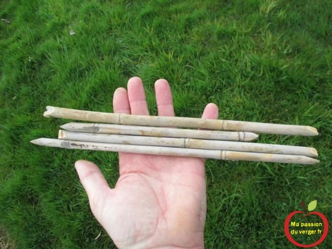 Écarteurs réalisé avec du bambou, pour former poirier