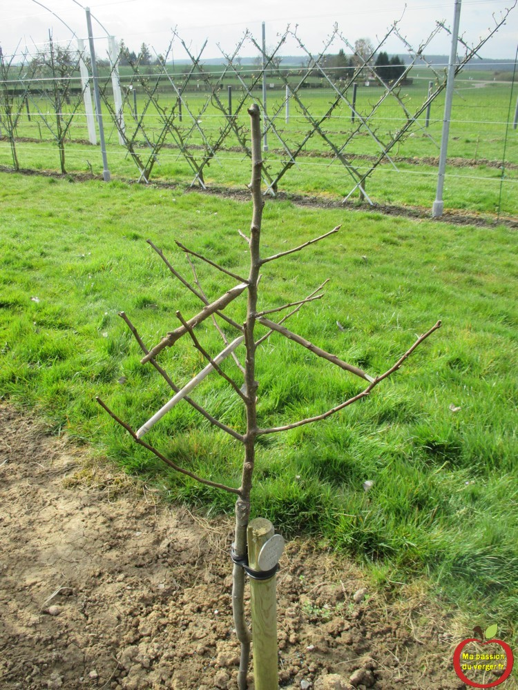 Cr er un verger familial ma passion du verger - Quel arbre fruitier planter ...