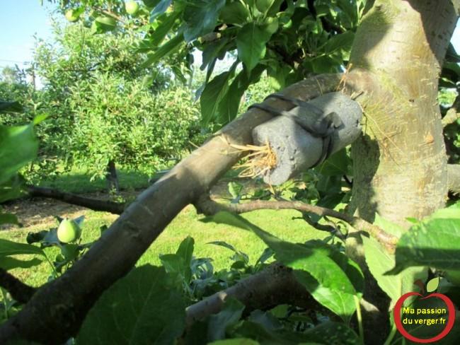 Un très bon moyen de lutter contre les pucerons, dans le verger, potager et jardin, avec un abri à forficules.