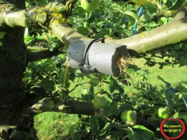 Déplacer un abri avec les forficules, pour lutter contre les pucerons, sur les arbres fruitiers. Avec les liens caoutchouc EPDM, c'est très facile et rapide à faire.