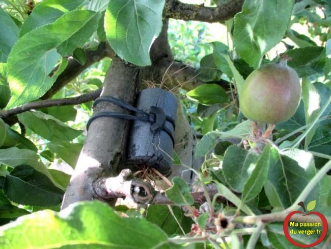 Triangle outillage- Triangle -Déplacer un abri avec les forficules, pour lutter contre les pucerons, sur les arbres fruitiers. Avec les liens caoutchouc EPDM, c'est très facile et rapide à faire.