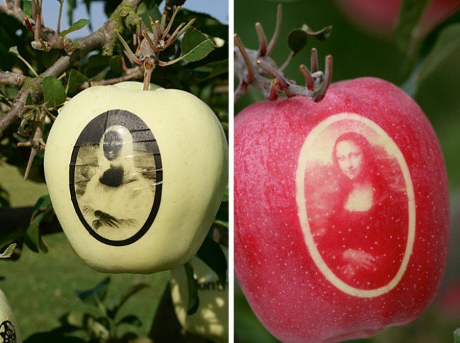 marquage-des-pommes